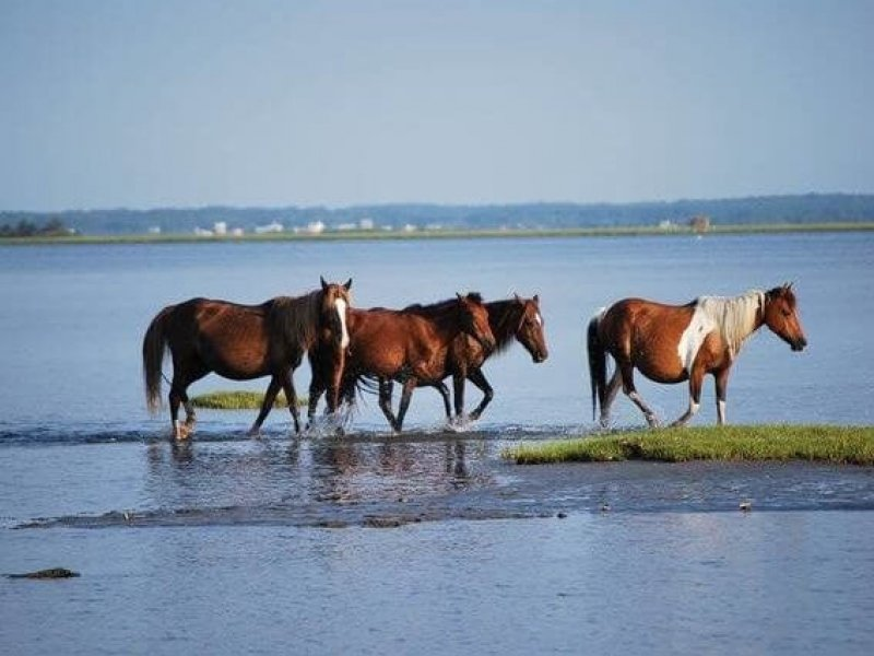 Horses walking across water